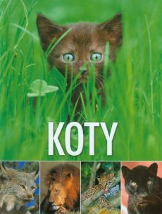 Koty - Outlet