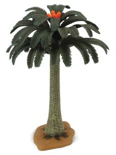 Drzewo Cycad - Outlet